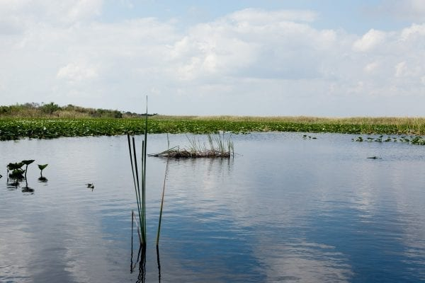 Calm Waters of the Everglades