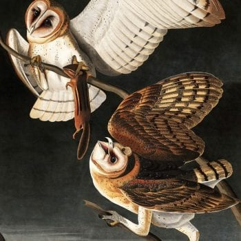 James Audubon